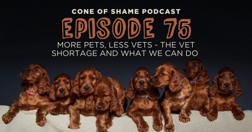 vet shortage