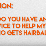 5 Ways to Stop Hairballs From Happening