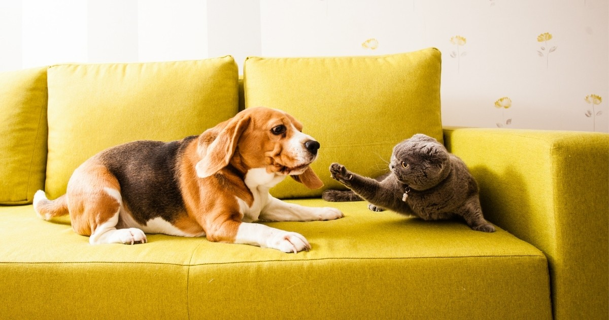veterinarian breeder relationship