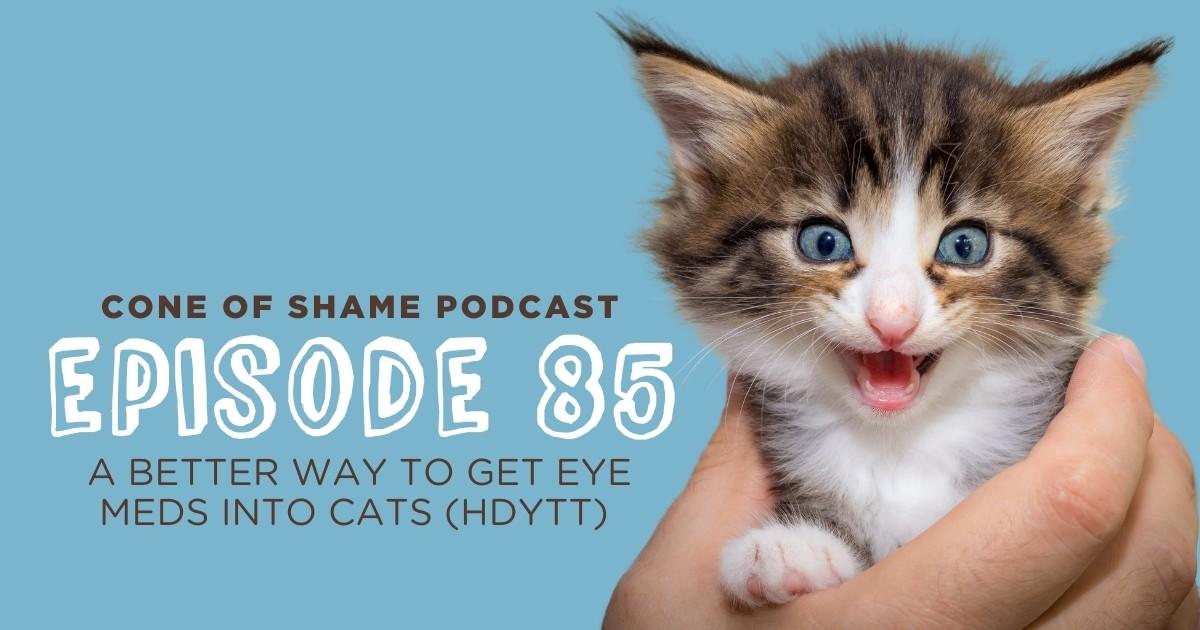 kitten needing eye medication