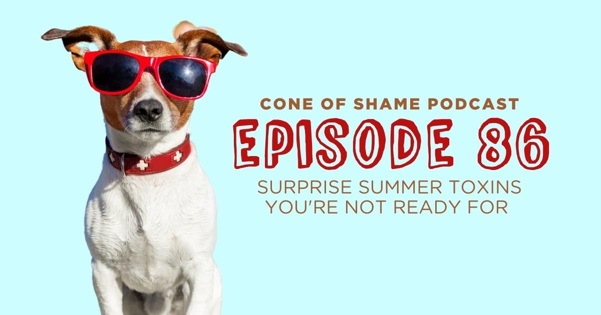 dog wearing sunglasses in summer