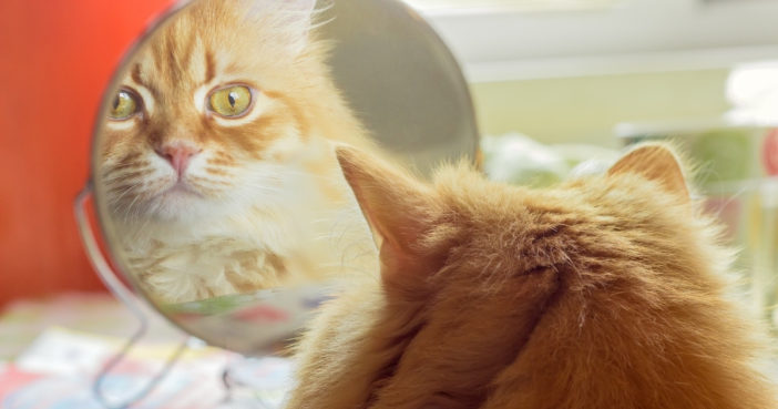 orange cat looking at itself in a mirror