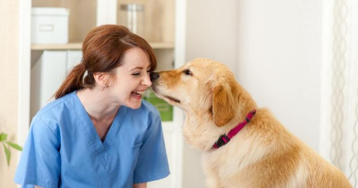 happy veterinarian and golden retriever