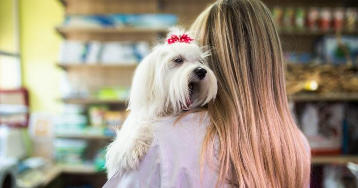 veterinary technician holding white dog over shoulder