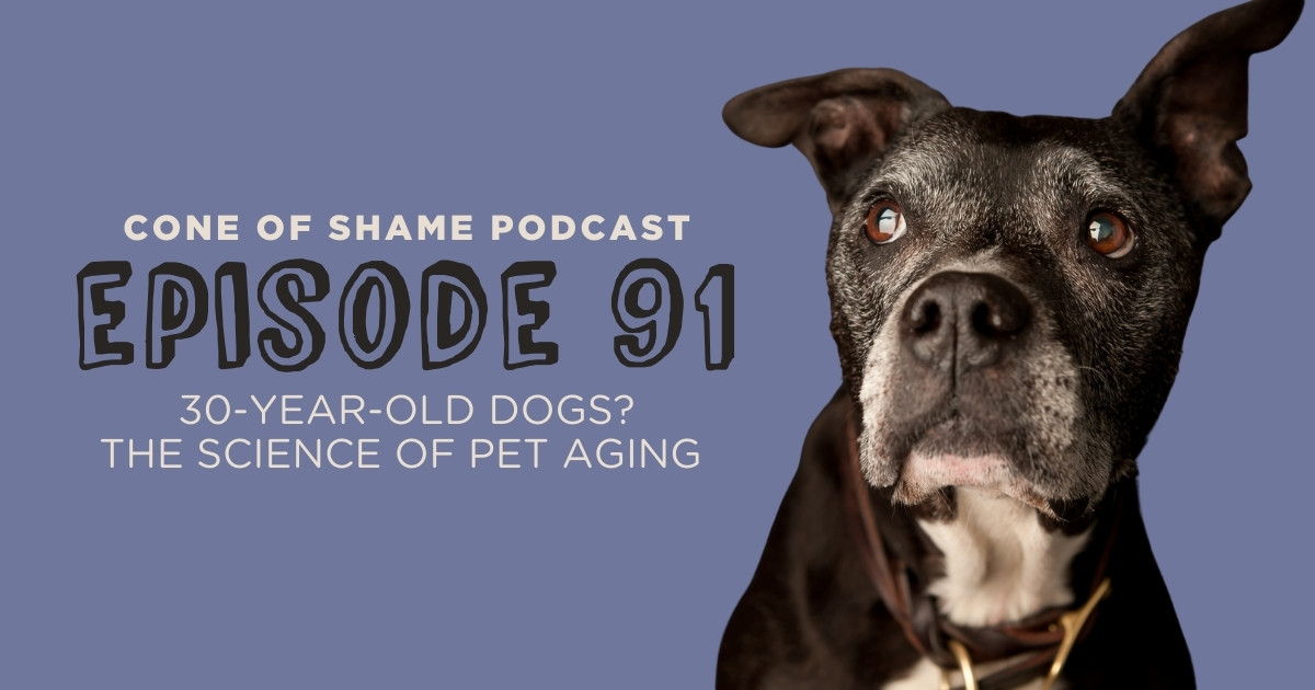 old dog with white face