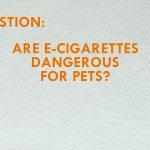 The Truth about  E-Cigarettes & Pets