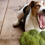 Could Feeding Your Dog Veggies Cause Nutritional Deficiencies?