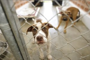 save money at the vet adopt