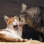 4 Subtle Ways Cats Communicate Without Meowing