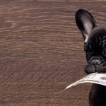 10 Wrong Things Pet Owners Say About My Salary