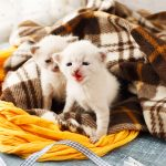 """There's No Such Thing As """"Free"""" Kittens"""
