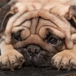 5 Tips for Controlling Pain in Pets