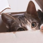 Top 5 Things You Don't Want to Tell Your Vet (but Should!)
