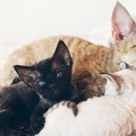 5 Simple Steps for a Stress-Free Cat