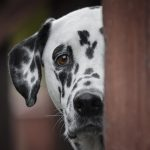 A Resolution for Pet Owners: Tell Me What I Did Wrong