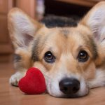 10 Ways to Love Your Dog this Valentine's Day, Without the Calories!