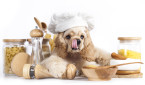 American Cocker Spaniel puppy in chef's hat