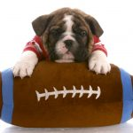 Quiz: What Football Position Would Your Pet Play?
