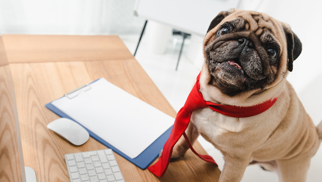 customer service veterinary