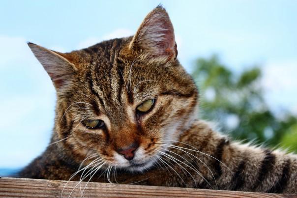 Sat cat gazing