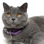 3 Reasons Your Cat Needs A Collar
