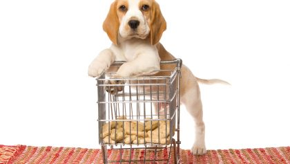 Cute Beagle puppy with miniature shopping cart on white background