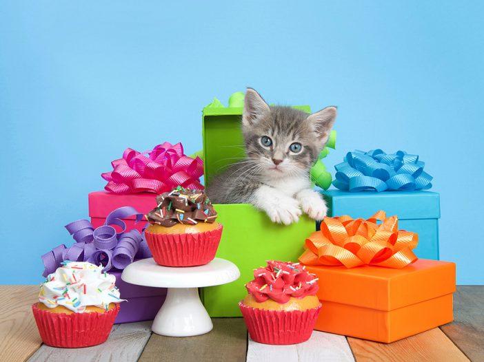 kitten gifts