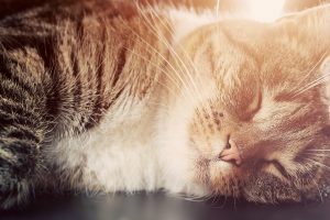 Cute small cat sleeping. Happy expression, light flare. Adorable