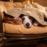 Loyal, Clumsy, Fierce: What Kind of Pet Are You?