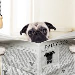 Is Pepto Bismol Okay For Dogs?