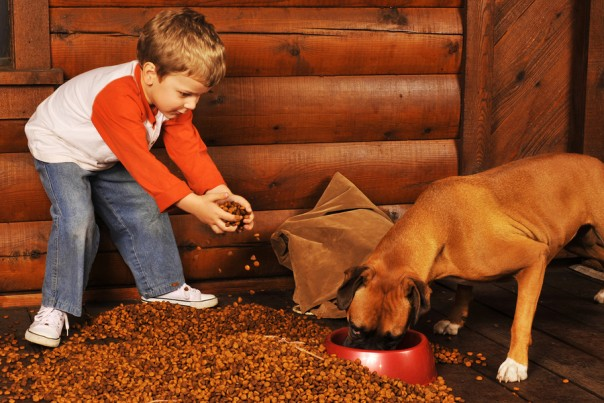 Preschooler feeding his pet boxer by dumping a large bag of dry dog food on the porch of his log home.