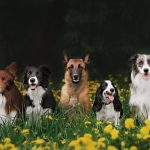 "Have You Heard of These 5 Accidental ""Dog Breeds""?"