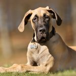 This Grateful Great Dane Story Will Make Your Day