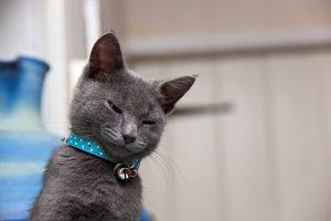 Grey Kitten Waking Up