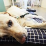 An Open Letter to Veterinary ER Clients