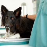 The Difference Between Low Cost Spay/Neuters and Regular Clinics May Surprise You