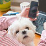 5 Tips for Succeeding in Veterinary Medicine