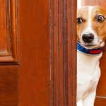 The 5 Ridiculous Reactions Your Dog Has to Being Pilled
