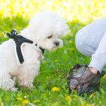 How to Get Your Dog to STOP Eating Poop