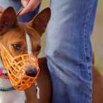 Stop Saying Party Hat! Muzzle is Not a Dirty Word