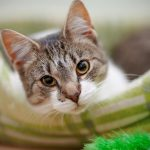 3 Major Mistakes With New Kittens