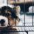 The Main Way Clients Fail Their Pets