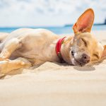 2 Sneaky Sunscreen Ingredients That Are Toxic to Pets
