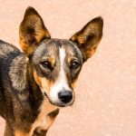 The Unfair Necessity of Euthanizing an Aggressive Dog