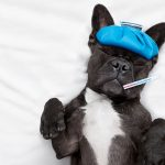 You Need to Know About These 5 Pet Emergencies
