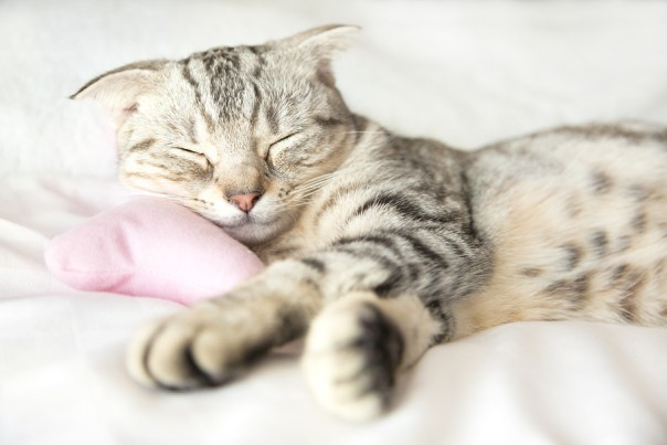 Smiling Cat Sleep On The Bed