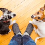 I'm a Vet and a Panicky Pet Owner – and Here's Why Specialists Rule