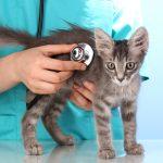 I Still Chose Cancer over Kittens