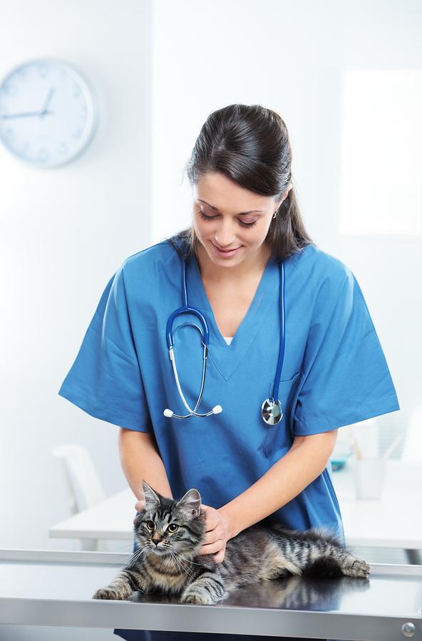 Veterinary Caring Of A Cute Cat