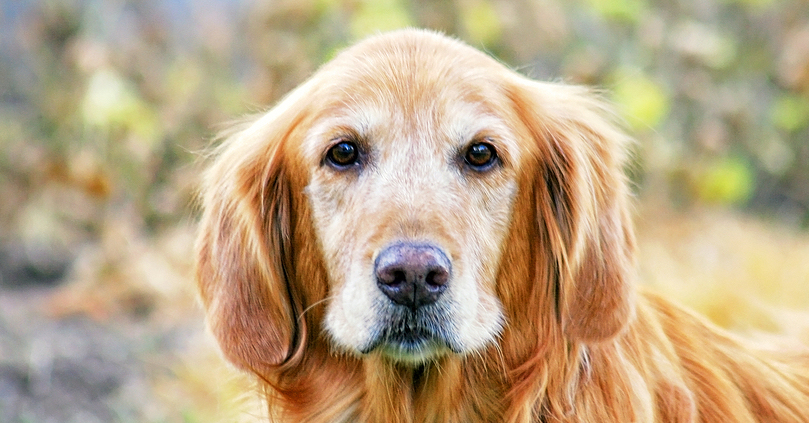 Why i sedate every pet for euthanasia and you should too why i sedate every pet for euthanasia and you should too drandyroark solutioingenieria Choice Image